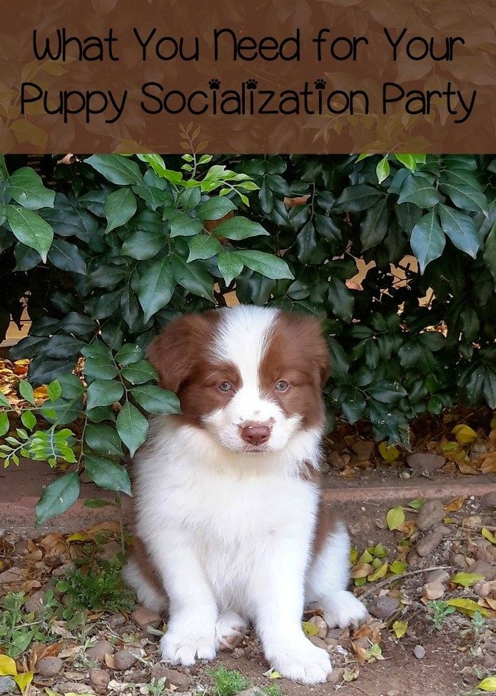 What You Need for Your Puppy Socialization Party