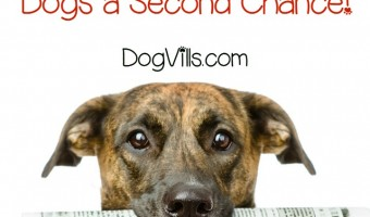 Animal Planet and the ASPCA teamed up to share the remarkable transition of six shy dogs in Second Chance Dogs. Check out the details!