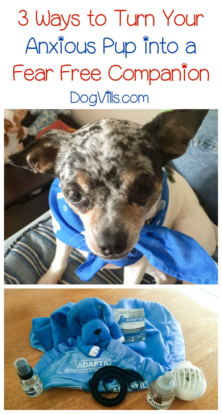 3 Ways Adaptil Can Help Turn an Anxious Pup Into A Fear Free Companion #FearFree