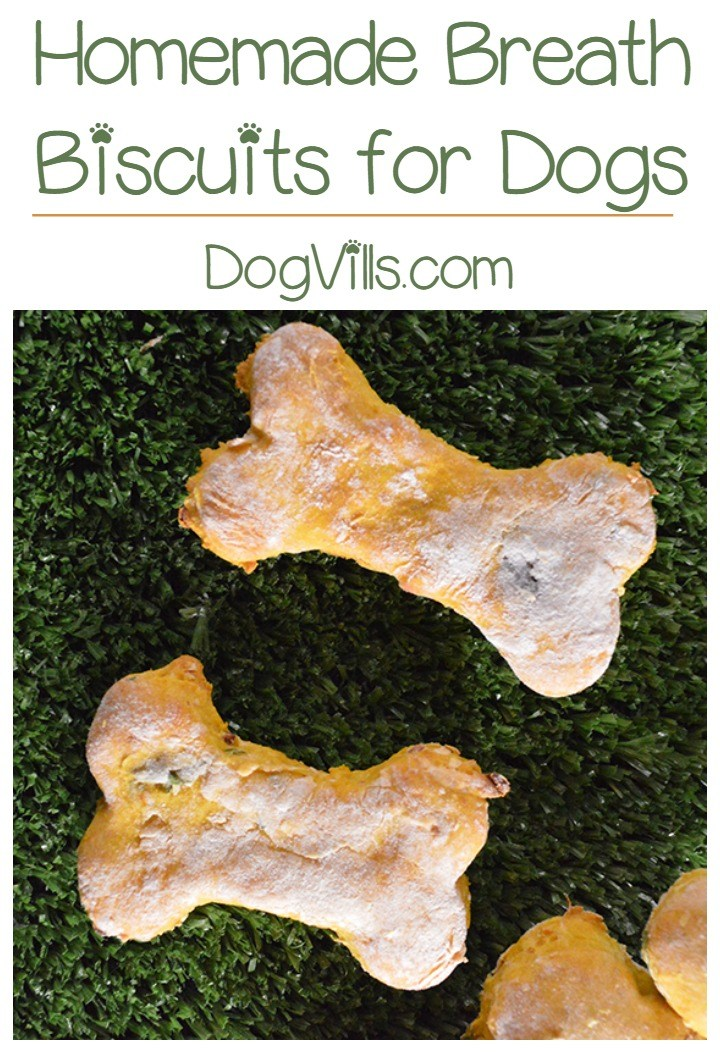 Homemade Minty Breath Biscuits Recipe for Dogs