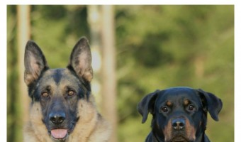 Wondering which fab famous people literally run with the big dogs? Check out our favorite celebrities who log large dog breeds!