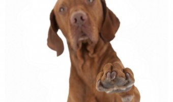 When it comes to dog training, few methods cause more confusing than the click method. How does clicker training work? Should you reward your dog every time you click? Is the click itself a reward? We're talking about the click debate and sharing some clicker training basics to hopefully demystify the method once and for all. Come check it out!