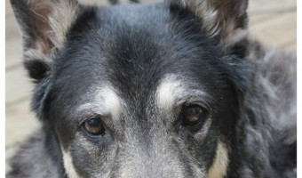 Coping with the loss of your dog isn't easy for you or your other pets. Read on for tips from experience on filling the hole in your heart & your home.