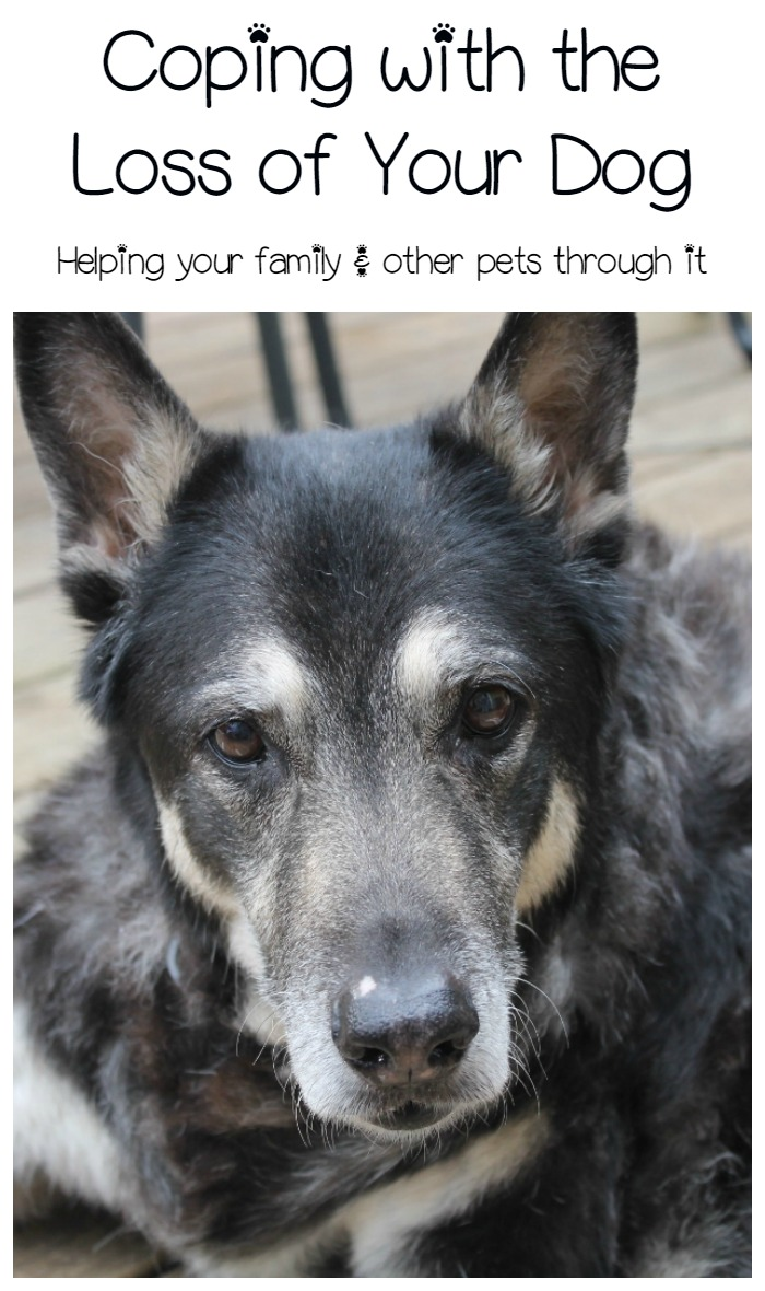 Coping Through the Loss of a Dog: A Hole in the Home & the Heart