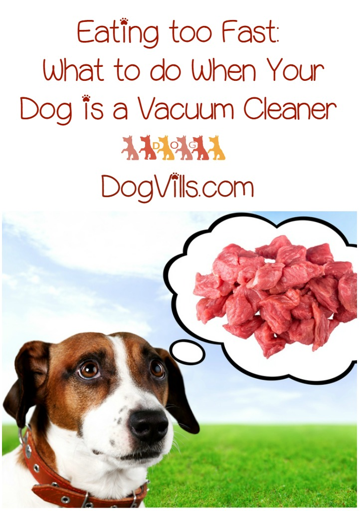Eating too Fast – What to do When Your Dog is a Vacuum Cleaner