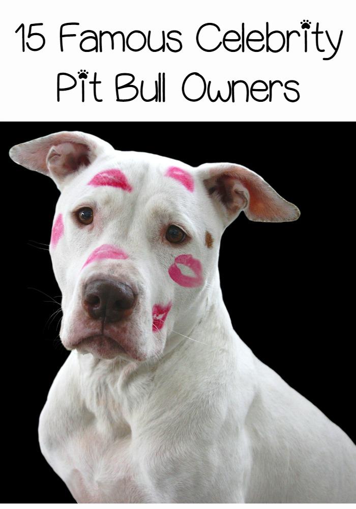 Pit bull - Wikipedia