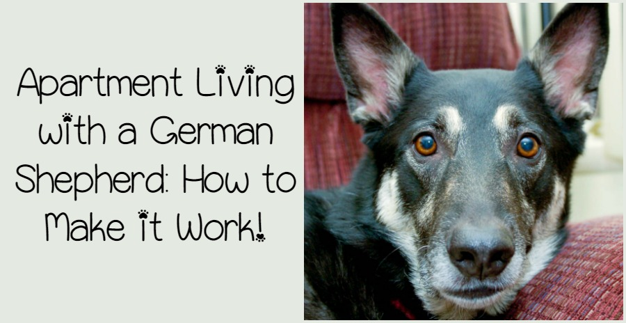 how to house train your dog in an apartment