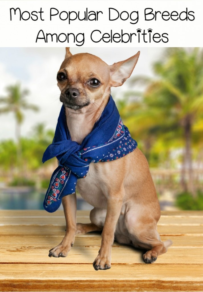 Top 3 Most Popular Dog Breeds Among Celebrities Dogvills