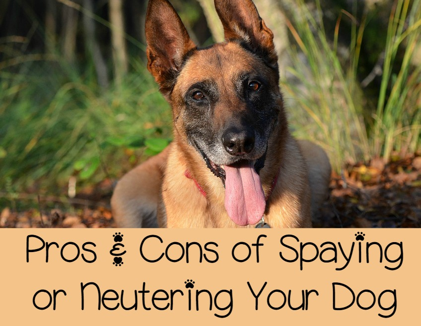 Pros And Cons Of Spaying Or Neutering Your Dog