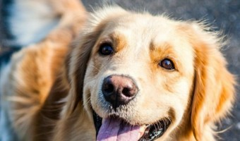 Just who is the top dog? Check out the list of America's 50 favorite dog breeds to find out! Did your pooch make the cut?