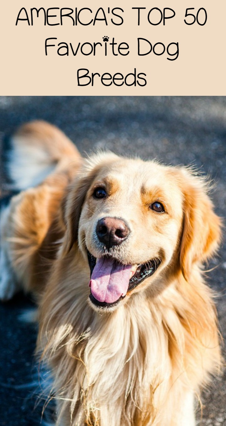 Who Are America's Top 50 Favorite Dog Breeds?