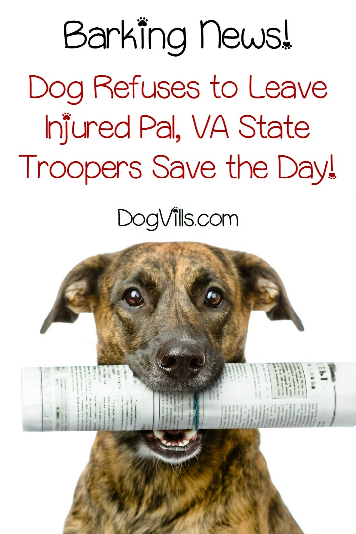 Dog Refused to Leave Injured Pal so VA State Troopers Step In to Save the Day!