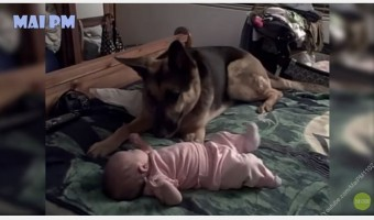 This adorable compilation of German Shepherds playing with and protecting babies shows why they're such amazing family dogs!