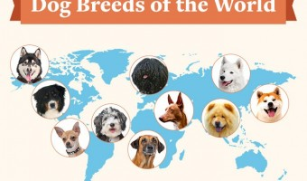 Crazy Facts About Dogs Around the World