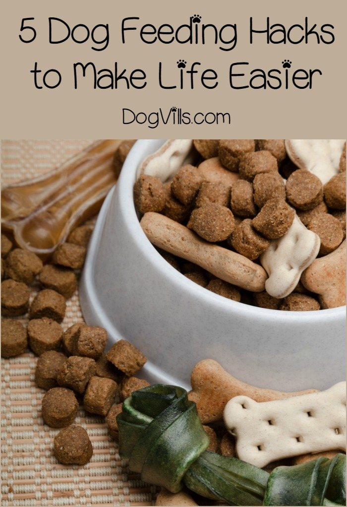5 Dog Feeding Hacks That You Want to Know Right Now