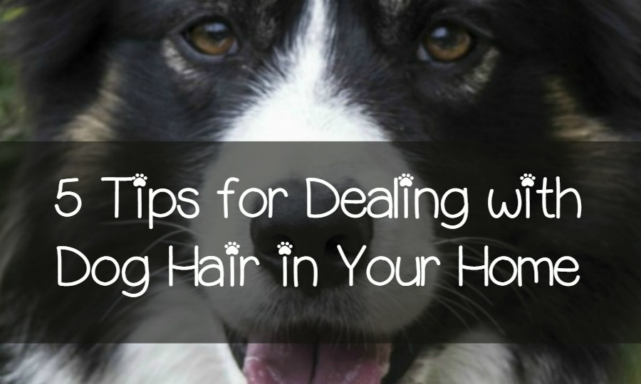 5 Tips To Minimizing Dog Hair Around Your Home Dogvills