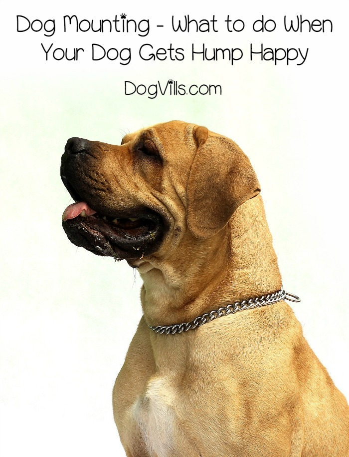 Dog Mounting – What to do When Your Dog Gets Hump Happy