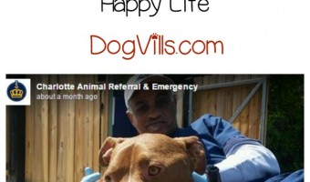 This is a story of caring people and a dog with a lot of will and determination. A pit bull was found by Casey Lawrence, a real estate agent in Rock Hill, South Carolina. What happens next is nothing short of inspirational.