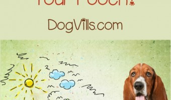 Doggy daycare is a term that conjures up images of our dogs crying and sobbing while they wait for us to get them from the strange land we left them in. Is that really what it's like, though? Should you really be nervous about it? Find out the truth about dog daycare.