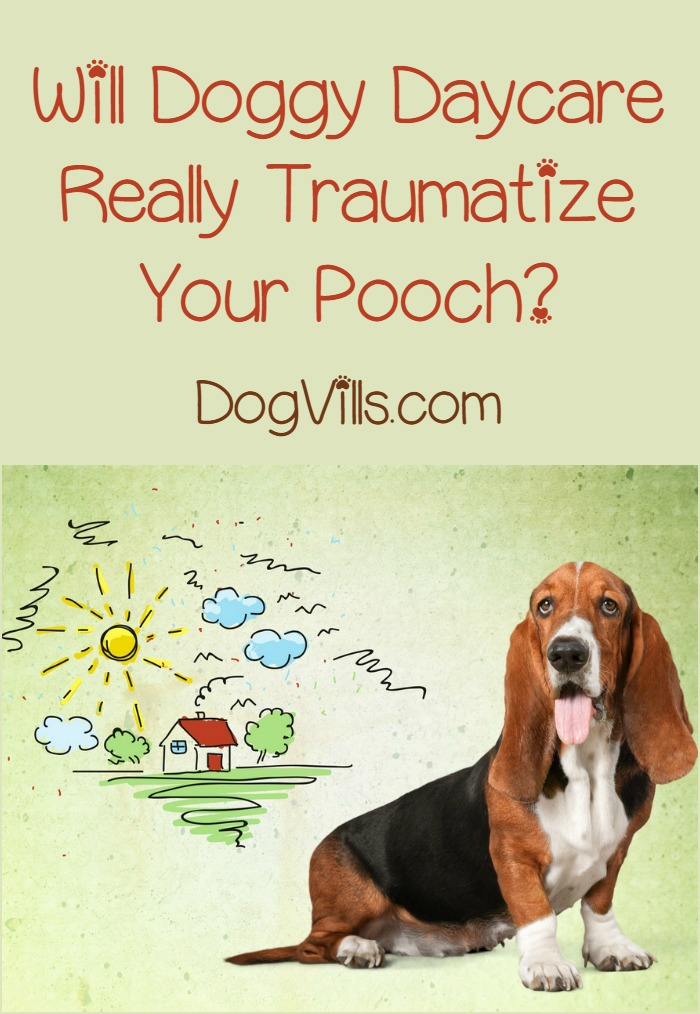 Will Doggy Daycare Traumatize Your Pooch?