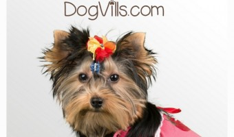 If you are a dog owner, you are probably always in search of ways to make things like grooming, exercising, feeding, playing and training much easier. Well, look no further because here are some of the best hacks for dog owners.