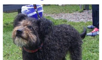 Have you heard? The AKC just welcomed their 190th dog breed! Come learn all about the lively, energetic Pumi and find out what this means for him!