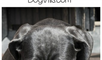 Wondering how to get rid of the nastiest pet odors in your home? Check out our solutions!