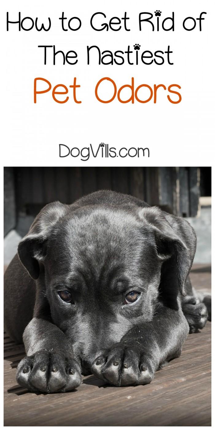 3 Easy Ways To Get Rid Of The Nastiest Pet Odors Dogvills