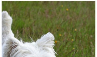 The 5 Best Hypoallergenic Dog Breeds for People with PTSD