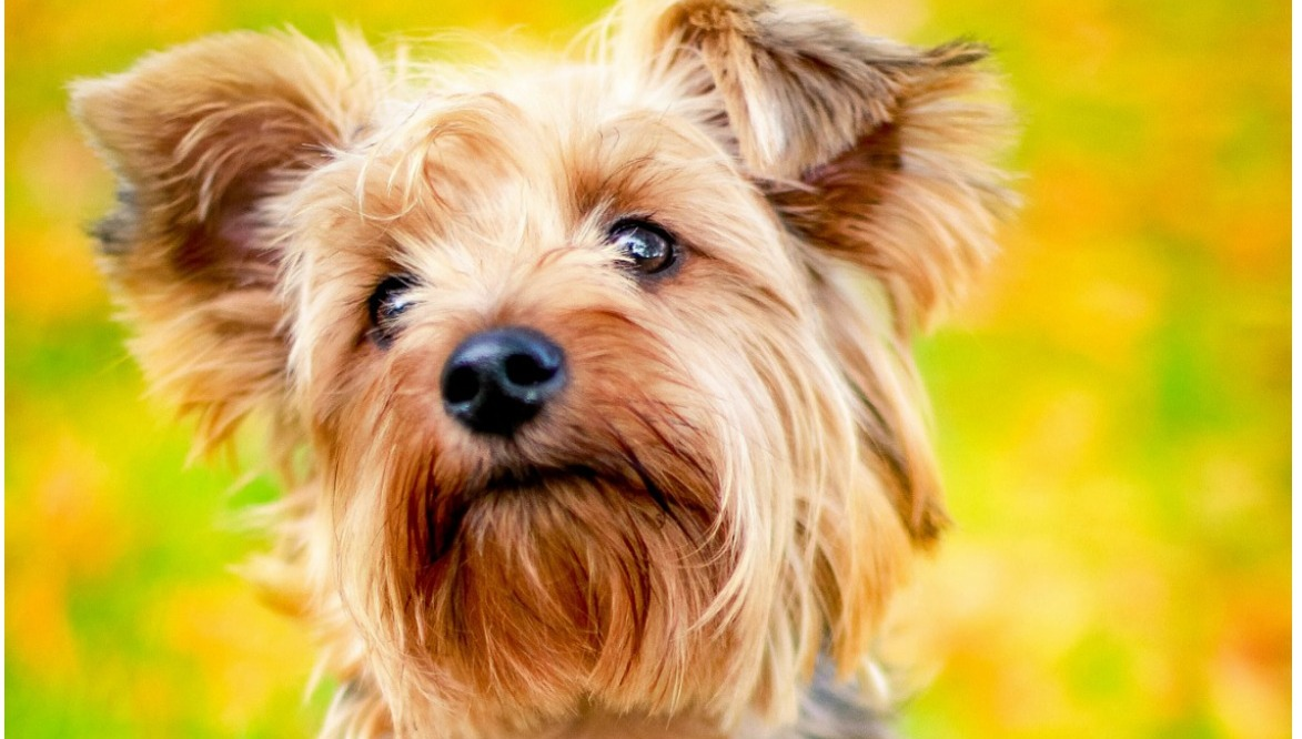 Top Dog Food For Small Dogs