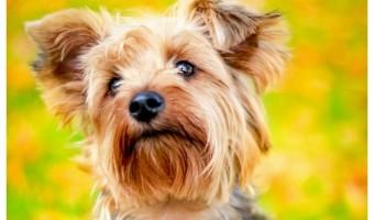 Top 5 Hypoallergenic Breeds Best for Apartment Living