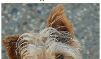 Best Hypoallergenic Dog Food for Yorkies
