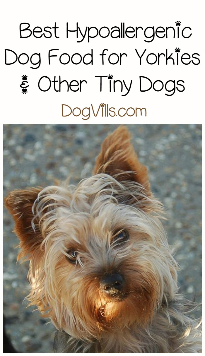 yorkie dog food best hypoallergenic dog food for yorkies 7691