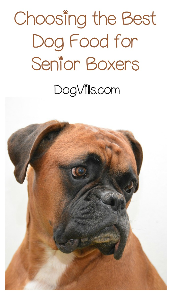 Is Senior Dog Food Necessary