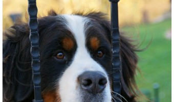 Proposed Bill in New York Would Make Dog Discrimination Illegal for Landlords