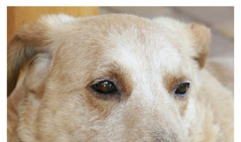 Feeding Older Dogs – Fewer Teeth Doesn't Mean Less Need for Nutrition