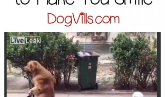 This golden retriever riding on a tricycle train will make you smile! Check it out!