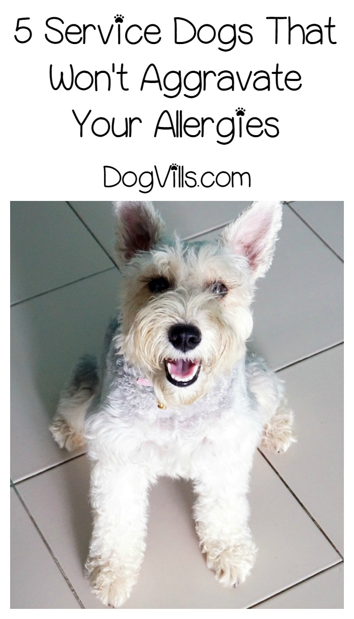 Naturally Hypoallergenic Dog Food