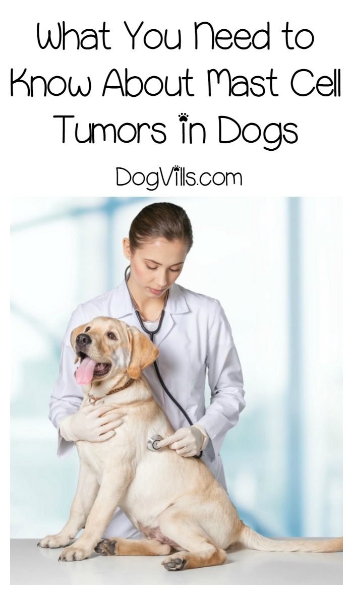 Mast Cell Tumors - Everything You Need to Know