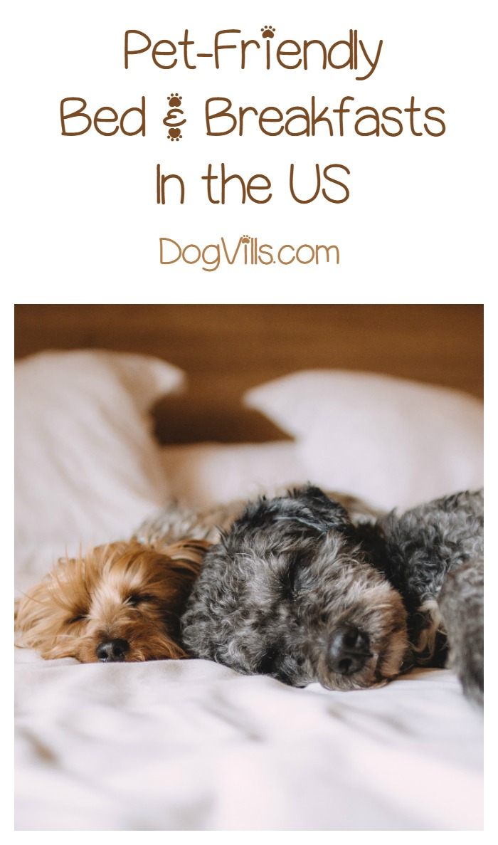 Best Bed and Breakfasts in the U.S. That Welcome Your Dog