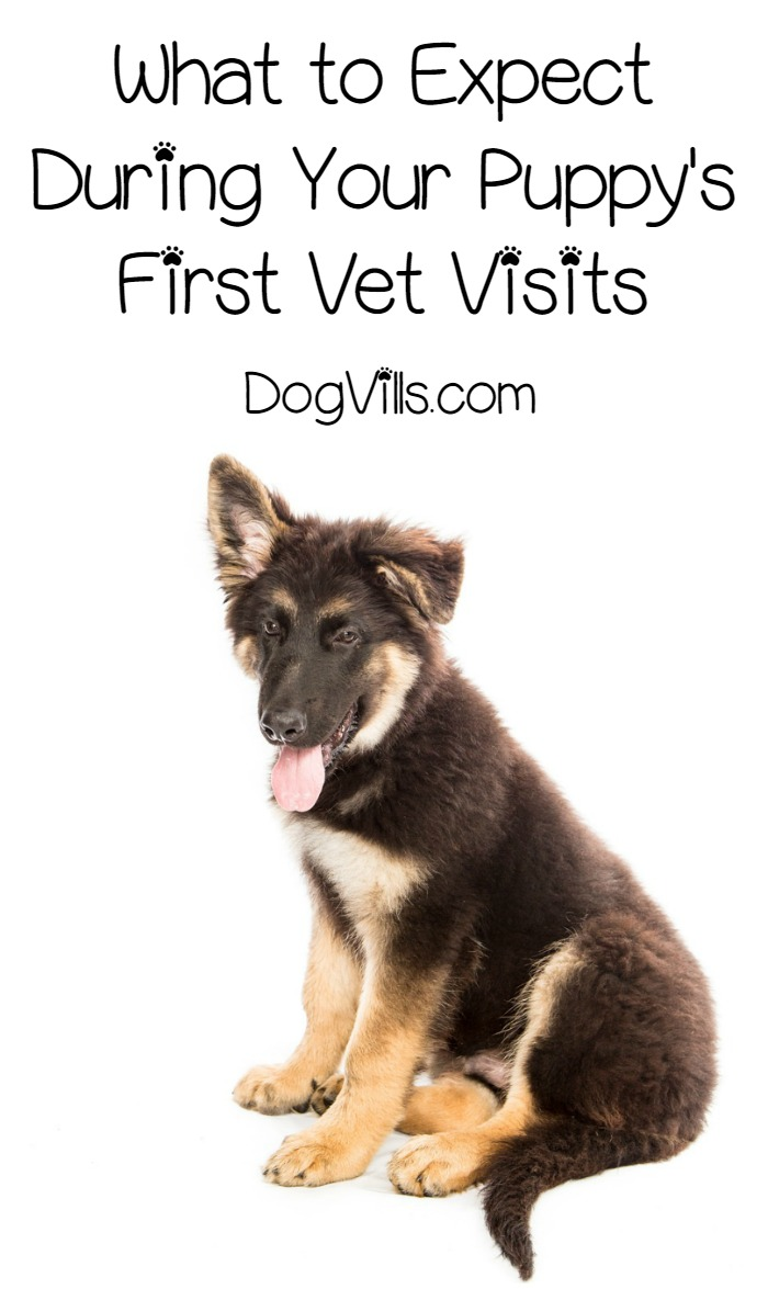 Puppy Care – All About the First Weeks of Vet Visits