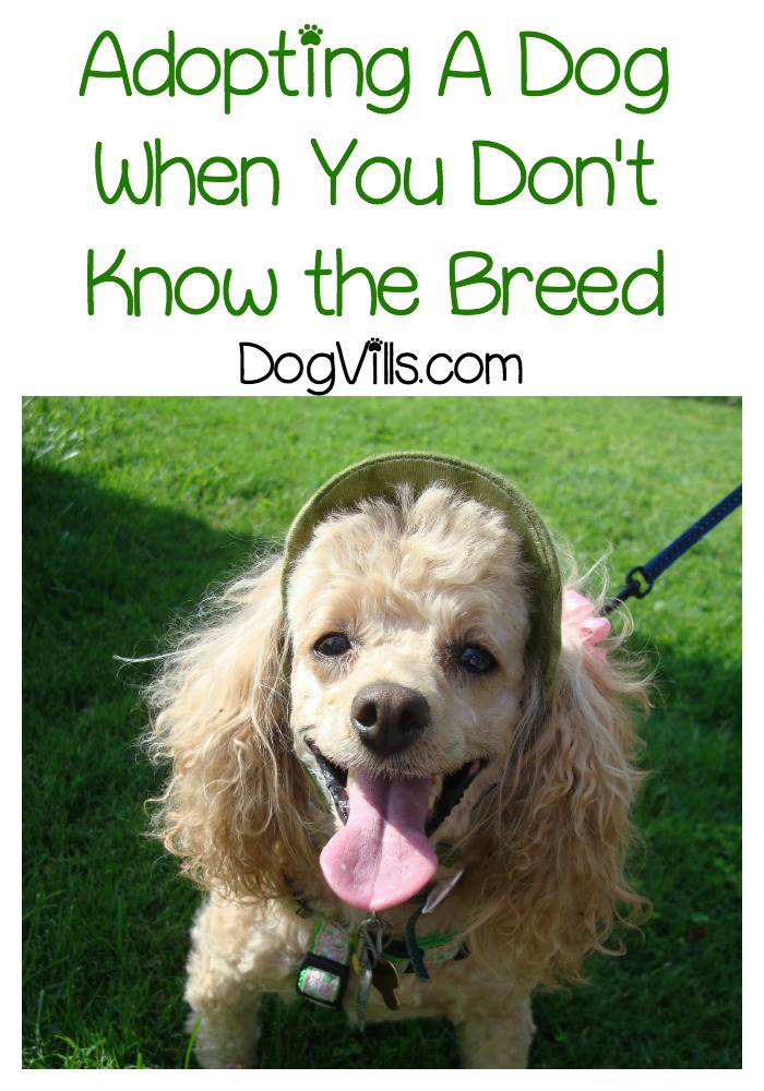 Adopting A Dog When You Don't Know the Breed