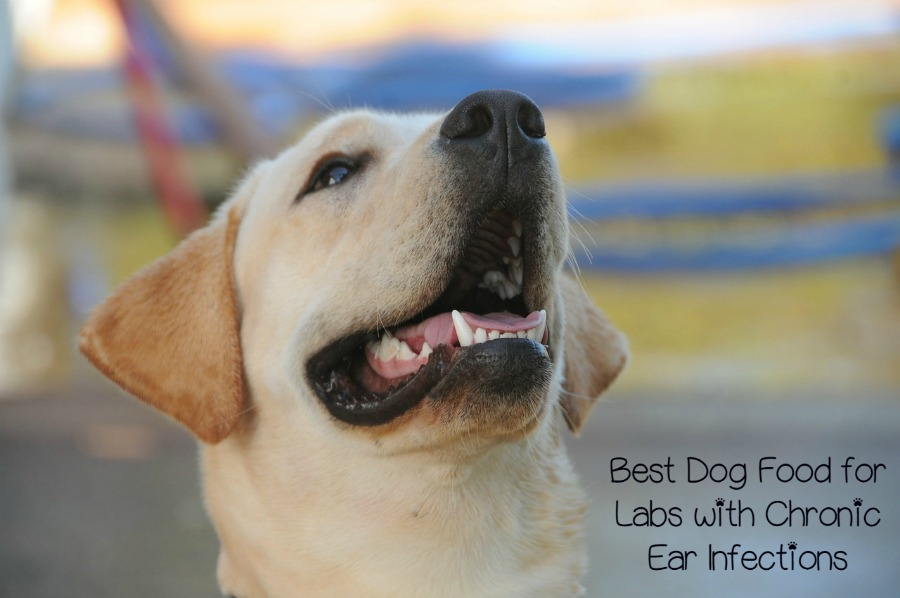 What Is The Best Dog Food For Labs With Ear Infections