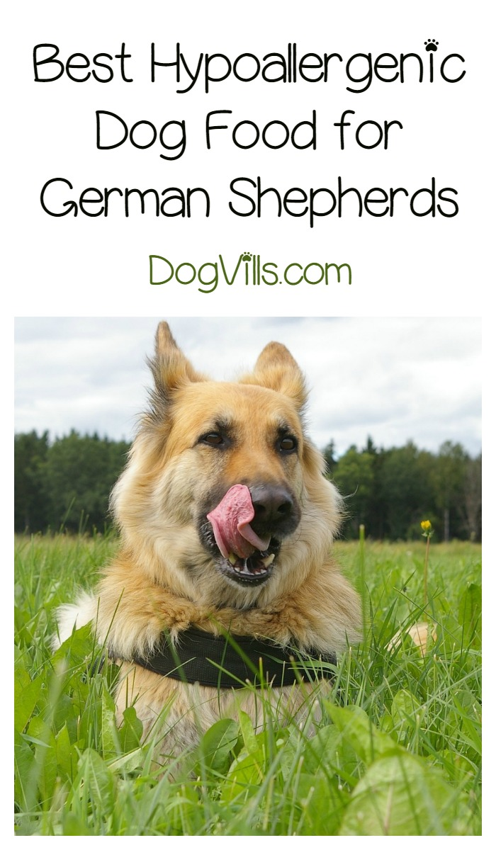 best dog food for german shepherd puppy best hypoallergenic dog food for german shepherds dogvills 8088