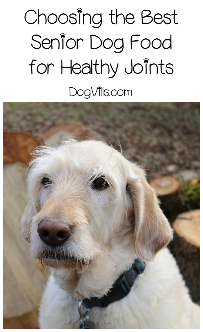Choosing the Best Senior Dog Food for Healthy Joints