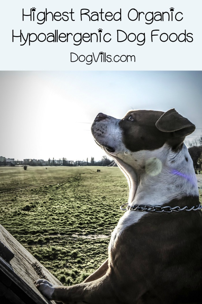 Highest Rated Organic Hypoallergenic Dog Foods