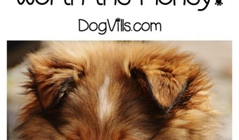 Wondering if the FURminator line of dog accessories are worth the money? Check out our thoughts on it, because buying dog stuff shouldn't be hard!