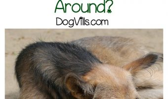 What Do You Do When Your Dog Has Trouble Getting Around?