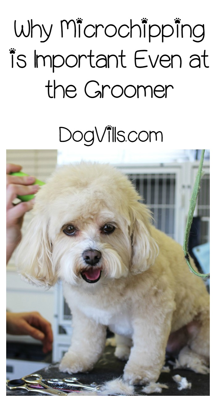 Why Microchipping is Important Even at the Groomer