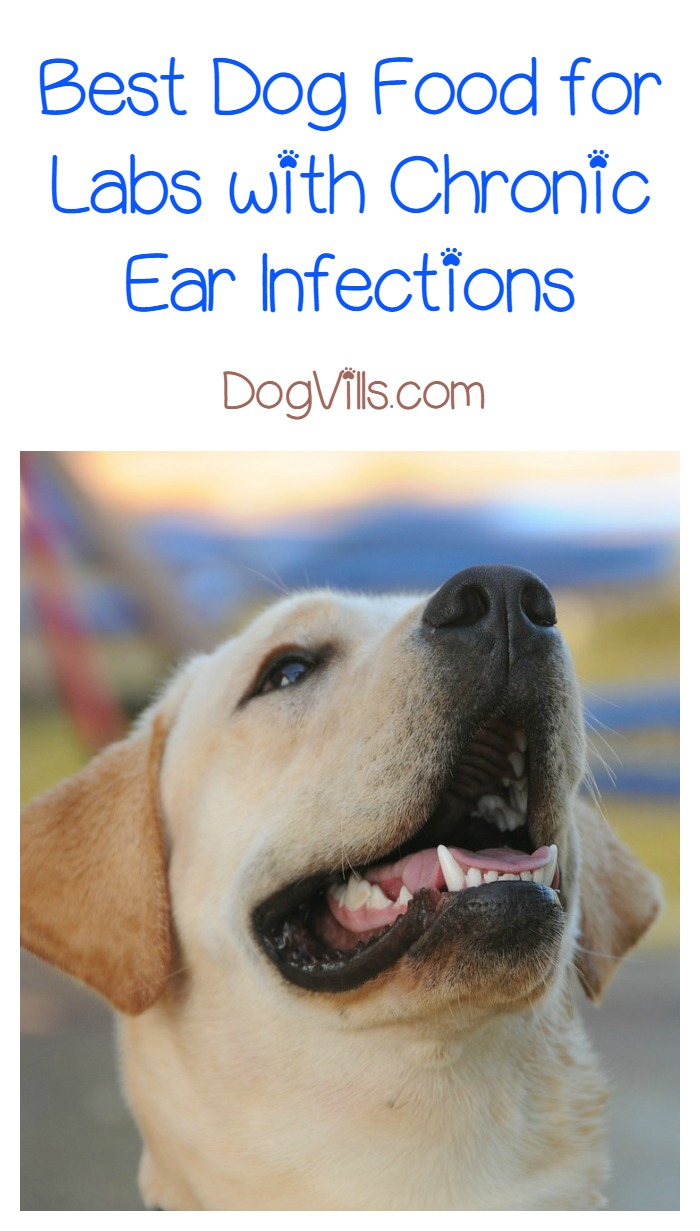 Best Dog Food For Labs With Ear Infections